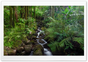 Tropical Stream HD Wide Wallpaper for Widescreen