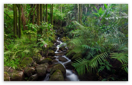 Tropical Stream ❤ 4K UHD Wallpaper for Wide 16:10 5:3 Widescreen WHXGA WQXGA WUXGA WXGA WGA ; UltraWide 21:9 24:10 ; 4K UHD 16:9 Ultra High Definition 2160p 1440p 1080p 900p 720p ; UHD 16:9 2160p 1440p 1080p 900p 720p ; Standard 4:3 5:4 3:2 Fullscreen UXGA XGA SVGA QSXGA SXGA DVGA HVGA HQVGA ( Apple PowerBook G4 iPhone 4 3G 3GS iPod Touch ) ; Smartphone 16:9 3:2 5:3 2160p 1440p 1080p 900p 720p DVGA HVGA HQVGA ( Apple PowerBook G4 iPhone 4 3G 3GS iPod Touch ) WGA ; Tablet 1:1 ; iPad 1/2/Mini ; Mobile 4:3 5:3 3:2 16:9 5:4 - UXGA XGA SVGA WGA DVGA HVGA HQVGA ( Apple PowerBook G4 iPhone 4 3G 3GS iPod Touch ) 2160p 1440p 1080p 900p 720p QSXGA SXGA ; Dual 16:10 5:3 16:9 4:3 5:4 3:2 WHXGA WQXGA WUXGA WXGA WGA 2160p 1440p 1080p 900p 720p UXGA XGA SVGA QSXGA SXGA DVGA HVGA HQVGA ( Apple PowerBook G4 iPhone 4 3G 3GS iPod Touch ) ;