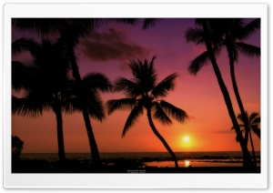 Tropical Sunset HD Wide Wallpaper for Widescreen