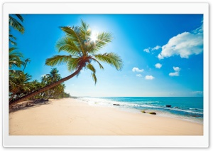 Tropical Sunshine HD Wide Wallpaper for Widescreen