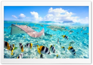 Tropical Underwater World HD Wide Wallpaper for Widescreen