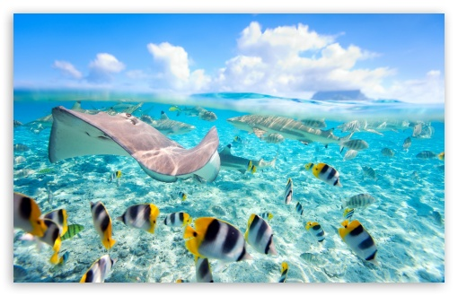 Tropical Underwater World Ultra Hd Desktop Background