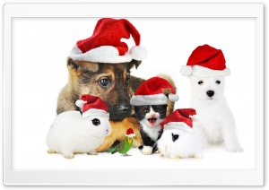 True Friends At Christmas HD Wide Wallpaper for Widescreen