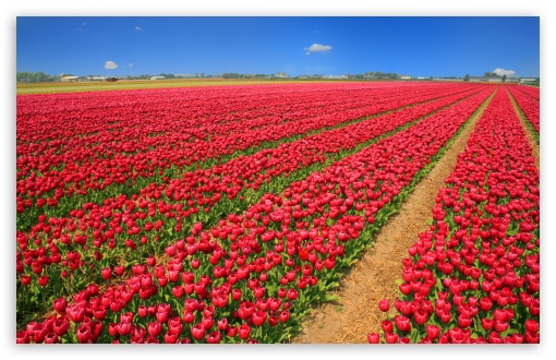 Tulip Field ❤ 4K UHD Wallpaper for Wide 16:10 5:3 Widescreen WHXGA WQXGA WUXGA WXGA WGA ; 4K UHD 16:9 Ultra High Definition 2160p 1440p 1080p 900p 720p ; UHD 16:9 2160p 1440p 1080p 900p 720p ; Standard 4:3 5:4 3:2 Fullscreen UXGA XGA SVGA QSXGA SXGA DVGA HVGA HQVGA ( Apple PowerBook G4 iPhone 4 3G 3GS iPod Touch ) ; Smartphone 5:3 WGA ; Tablet 1:1 ; iPad 1/2/Mini ; Mobile 4:3 5:3 3:2 16:9 5:4 - UXGA XGA SVGA WGA DVGA HVGA HQVGA ( Apple PowerBook G4 iPhone 4 3G 3GS iPod Touch ) 2160p 1440p 1080p 900p 720p QSXGA SXGA ; Dual 16:10 5:3 16:9 4:3 5:4 WHXGA WQXGA WUXGA WXGA WGA 2160p 1440p 1080p 900p 720p UXGA XGA SVGA QSXGA SXGA ;
