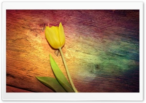 Tulip, Wooden Background HD Wide Wallpaper for Widescreen