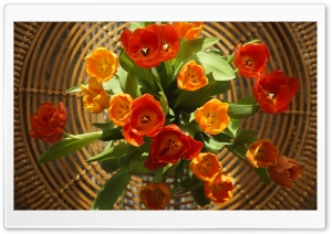 Tulips for Mother's Day HD Wide Wallpaper for Widescreen