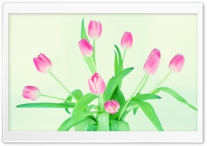 Tulips in a Vase HD Wide Wallpaper for 4K UHD Widescreen desktop & smartphone
