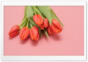 Tulips Spring Flowers Ultra HD Wallpaper for 4K UHD Widescreen desktop, tablet & smartphone
