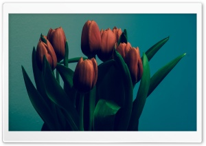 Tulips Vintage HD Wide Wallpaper for Widescreen