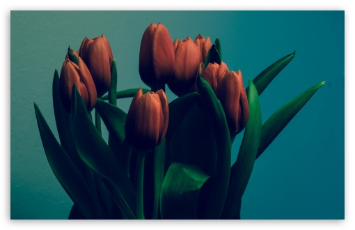 Tulips Vintage HD wallpaper for Standard 4:3 5:4 Fullscreen UXGA XGA SVGA QSXGA SXGA ; Wide 16:10 5:3 Widescreen WHXGA WQXGA WUXGA WXGA WGA ; HD 16:9 High Definition WQHD QWXGA 1080p 900p 720p QHD nHD ; Other 3:2 DVGA HVGA HQVGA devices ( Apple PowerBook G4 iPhone 4 3G 3GS iPod Touch ) ; Mobile VGA WVGA iPhone iPad PSP Phone - VGA QVGA Smartphone ( PocketPC GPS iPod Zune BlackBerry HTC Samsung LG Nokia Eten Asus ) WVGA WQVGA Smartphone ( HTC Samsung Sony Ericsson LG Vertu MIO ) HVGA Smartphone ( Apple iPhone iPod BlackBerry HTC Samsung Nokia ) Sony PSP Zune HD Zen ; Dual 4:3 5:4 16:10 5:3 UXGA XGA SVGA QSXGA SXGA WHXGA WQXGA WUXGA WXGA WGA ;