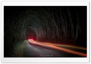Tunnel of Trees, Night, Car Light Trails Ultra HD Wallpaper for 4K UHD Widescreen desktop, tablet & smartphone