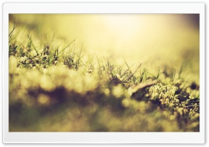Turf Macro HD Wide Wallpaper for Widescreen