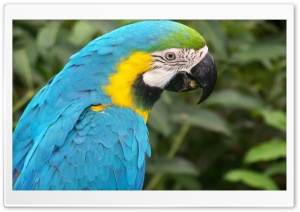 Turquoise Parrot HD Wide Wallpaper for Widescreen