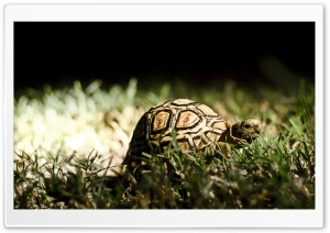 Turtle HD Wide Wallpaper for Widescreen