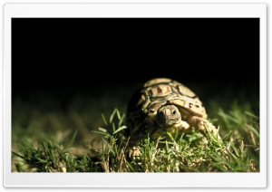 Turtle Close Up HD Wide Wallpaper for Widescreen