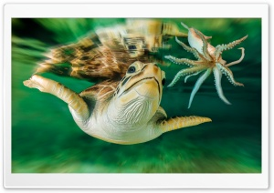 Turtle Octopus HD Wide Wallpaper for Widescreen