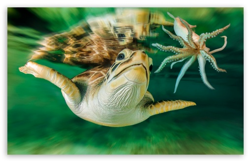 Turtle Octopus ❤ 4K UHD Wallpaper for Wide 16:10 5:3 Widescreen WHXGA WQXGA WUXGA WXGA WGA ; 4K UHD 16:9 Ultra High Definition 2160p 1440p 1080p 900p 720p ; Standard 4:3 5:4 3:2 Fullscreen UXGA XGA SVGA QSXGA SXGA DVGA HVGA HQVGA ( Apple PowerBook G4 iPhone 4 3G 3GS iPod Touch ) ; iPad 1/2/Mini ; Mobile 4:3 5:3 3:2 16:9 5:4 - UXGA XGA SVGA WGA DVGA HVGA HQVGA ( Apple PowerBook G4 iPhone 4 3G 3GS iPod Touch ) 2160p 1440p 1080p 900p 720p QSXGA SXGA ;