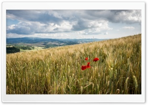 Tuscany Crops, Italy Ultra HD Wallpaper for 4K UHD Widescreen desktop, tablet & smartphone