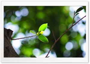 Twig Bokeh, Summer HD Wide Wallpaper for Widescreen