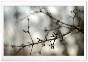 Twig Buds, Bokeh HD Wide Wallpaper for Widescreen
