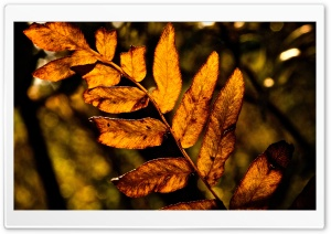 Twig With Dried Leaves HD Wide Wallpaper for Widescreen