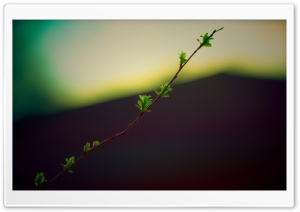 Twig With Green Buds HD Wide Wallpaper for Widescreen