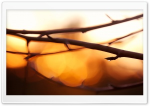 Twigs, Bokeh HD Wide Wallpaper for Widescreen