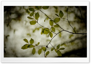 Twigs With Green Leaves HD Wide Wallpaper for Widescreen