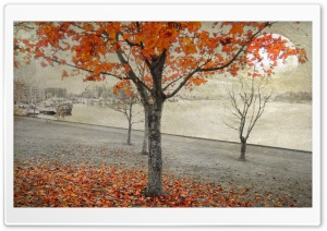 Twilight Autumn HD Wide Wallpaper for Widescreen