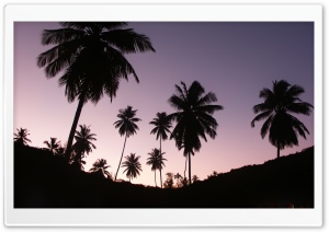 Twilight Palms HD Wide Wallpaper for Widescreen