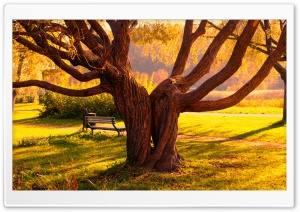 Twin Trees HD Wide Wallpaper for Widescreen