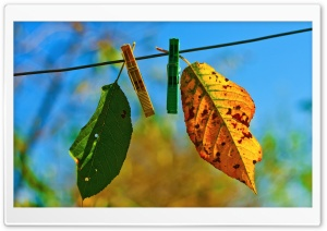 Two Autumn Leaves HD Wide Wallpaper for Widescreen