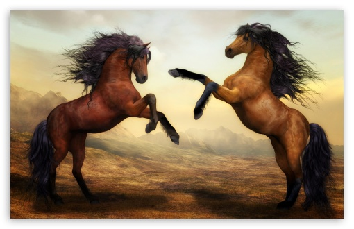 Download Two Beautiful Horses Fighting HD Wallpaper