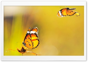 Two Butterflies Went Out at Noon HD Wide Wallpaper for Widescreen