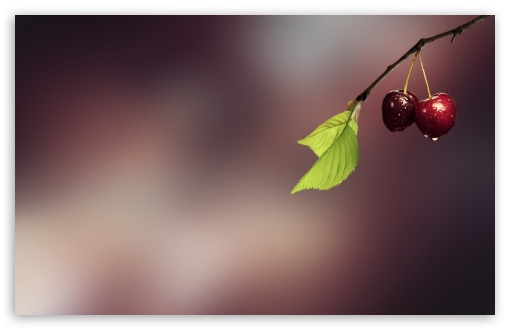 Two Cherries HD wallpaper for Wide 16:10 5:3 Widescreen WHXGA WQXGA WUXGA WXGA WGA ; HD 16:9 High Definition WQHD QWXGA 1080p 900p 720p QHD nHD ; Standard 4:3 5:4 3:2 Fullscreen UXGA XGA SVGA QSXGA SXGA DVGA HVGA HQVGA devices ( Apple PowerBook G4 iPhone 4 3G 3GS iPod Touch ) ; Tablet 1:1 ; iPad 1/2/Mini ; Mobile 4:3 5:3 3:2 16:9 5:4 - UXGA XGA SVGA WGA DVGA HVGA HQVGA devices ( Apple PowerBook G4 iPhone 4 3G 3GS iPod Touch ) WQHD QWXGA 1080p 900p 720p QHD nHD QSXGA SXGA ;