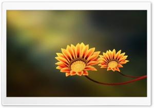 Two Flowers HD Wide Wallpaper for Widescreen