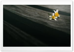 Two Flowers On Wood HD Wide Wallpaper for Widescreen