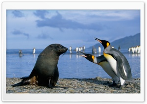 Two King Penguins And A Seal, Antarctica HD Wide Wallpaper for Widescreen