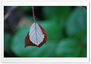 Two Leaves Ultra HD Wallpaper for 4K UHD Widescreen desktop, tablet & smartphone