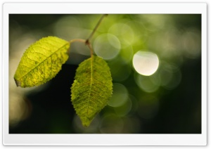 Two Leaves, Bokeh HD Wide Wallpaper for Widescreen