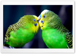 Two Parrots HD Wide Wallpaper for Widescreen