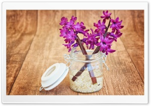 Two Purple Hyacinths HD Wide Wallpaper for Widescreen