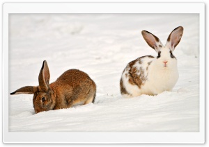 Two Rabbits In The Snow HD Wide Wallpaper for Widescreen