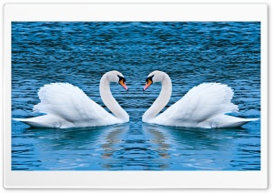 Two Swans HD Wide Wallpaper for Widescreen