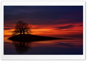Two Trees Ultra HD Wallpaper for 4K UHD Widescreen desktop, tablet & smartphone