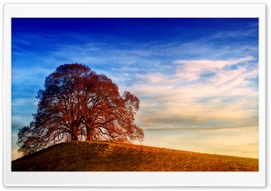 Two Trees, Hill, Landscape Ultra HD Wallpaper for 4K UHD Widescreen desktop, tablet & smartphone