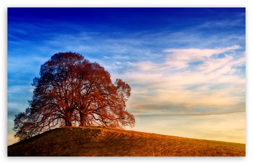 Two Trees, Hill, Landscape ❤ 4K UHD Wallpaper for Wide 16:10 5:3 Widescreen WHXGA WQXGA WUXGA WXGA WGA ; UltraWide 21:9 24:10 ; 4K UHD 16:9 Ultra High Definition 2160p 1440p 1080p 900p 720p ; UHD 16:9 2160p 1440p 1080p 900p 720p ; Standard 4:3 5:4 3:2 Fullscreen UXGA XGA SVGA QSXGA SXGA DVGA HVGA HQVGA ( Apple PowerBook G4 iPhone 4 3G 3GS iPod Touch ) ; Smartphone 16:9 3:2 5:3 2160p 1440p 1080p 900p 720p DVGA HVGA HQVGA ( Apple PowerBook G4 iPhone 4 3G 3GS iPod Touch ) WGA ; Tablet 1:1 ; iPad 1/2/Mini ; Mobile 4:3 5:3 3:2 16:9 5:4 - UXGA XGA SVGA WGA DVGA HVGA HQVGA ( Apple PowerBook G4 iPhone 4 3G 3GS iPod Touch ) 2160p 1440p 1080p 900p 720p QSXGA SXGA ; Dual 16:10 5:3 4:3 5:4 3:2 WHXGA WQXGA WUXGA WXGA WGA UXGA XGA SVGA QSXGA SXGA DVGA HVGA HQVGA ( Apple PowerBook G4 iPhone 4 3G 3GS iPod Touch ) ;