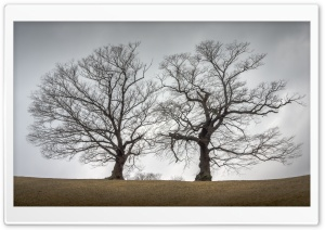 Two Trees Together, Autumn HD Wide Wallpaper for Widescreen