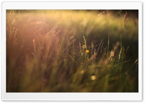 Two Yellow Flowers And Grass HD Wide Wallpaper for Widescreen