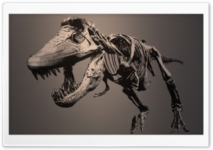 Tyrannosaurus HD Wide Wallpaper for Widescreen